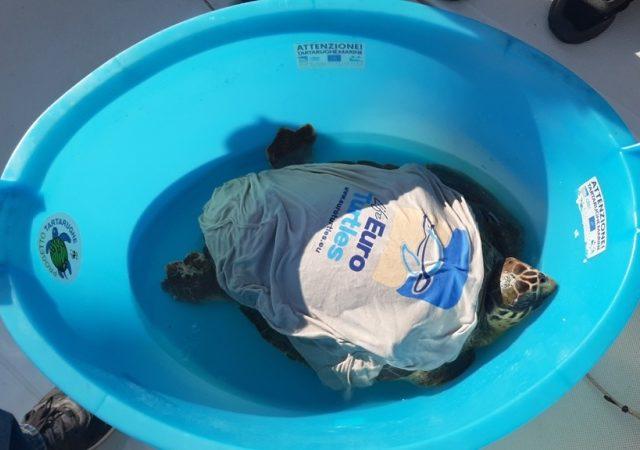 Ambiente, il WWF libera a Sciacca una tartaruga marina