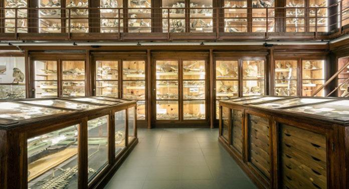 Museo zoologico Doderlein