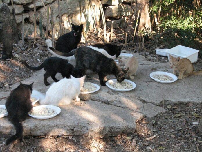 colonia felina- animali - covid 19