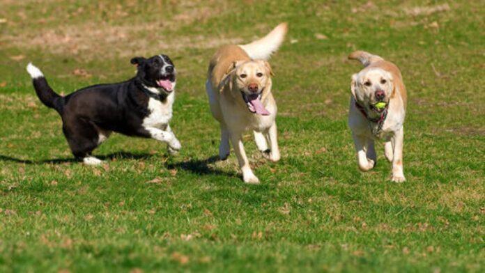 area-sgambamento-cani